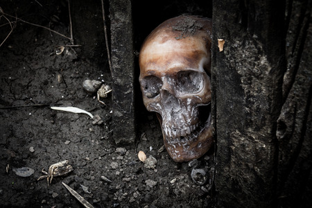 Still life with human skull and dried wood