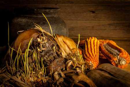 Human skull with corn shoots on the old wooden background, still life concept.