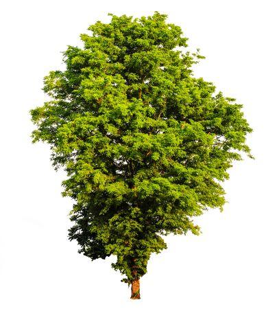 Photo pour Tropical tree tree asia nature - image libre de droit
