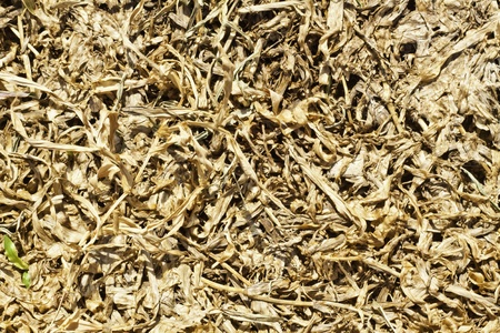 The dried grasses texture as the background.