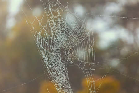 Photo for A large spiderweb hanging from a tree in the outdoors with water drops in the sunshine - Royalty Free Image