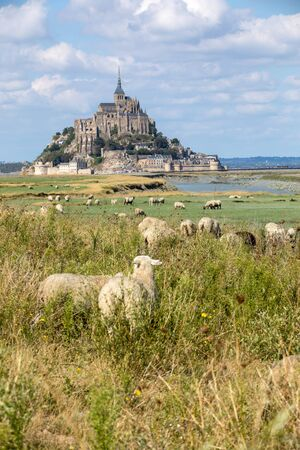 Photo for A flock of sheep grazing on the salt meadows close to the Mont Saint-Michel tidal island under a summer blue sky. Le Mont Saint Michel, France - Royalty Free Image