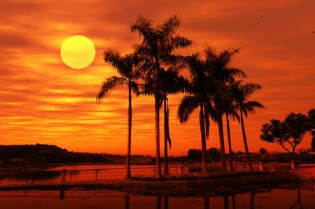 Photo pour palm with sunset - image libre de droit