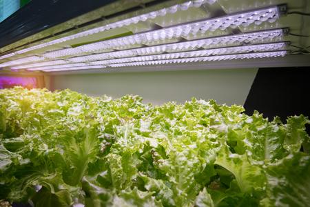 Foto de Organic hydroponic vegetable garden - Imagen libre de derechos