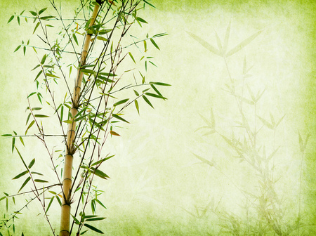 Photo pour bamboo on old grunge paper texture background - image libre de droit