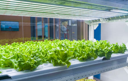 Photo pour Organic hydroponic vegetable grow with LED Light Indoor farm,Agriculture Technology - image libre de droit