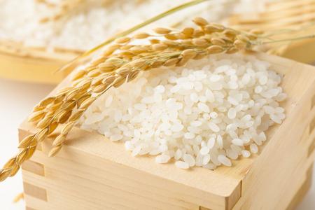 Photo for Japanese rice - Royalty Free Image