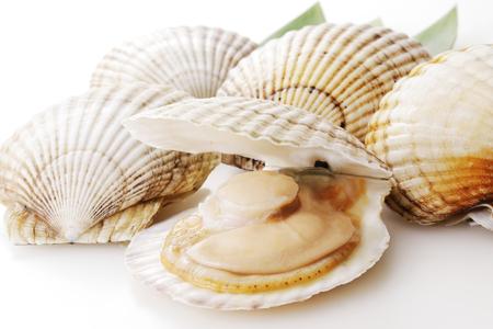 Photo pour Scallops in white - image libre de droit