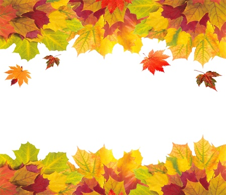 Autumn card of colorful leaves over white