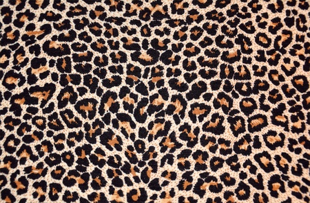 abstract texture of leopard fur (skin)