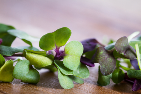 close up of mixed fresh organic micro greens to use in salads or other recipes
