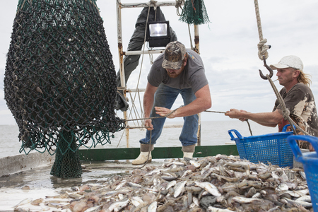 Foto de Deckhands bring a net full of fish onto the deck of a fishing boat - Imagen libre de derechos