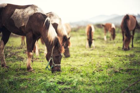 Photo pour Portrait Horse on the field - image libre de droit