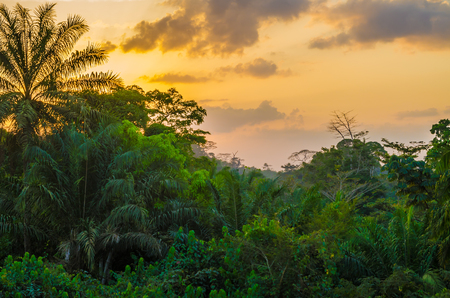 Photo pour Beautiful lush green West African rain forest during amazing sunset, Liberia, West Africa - image libre de droit