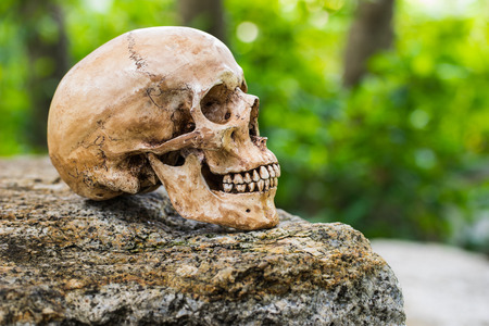 Still life,  human skull on the rock with green blur focus background