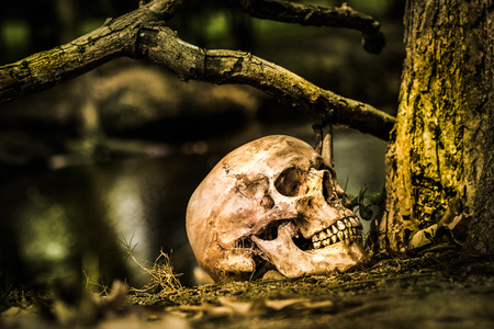 Still life, skull on dry leaves and log in the park