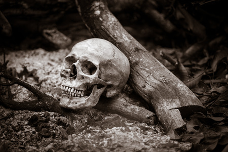 Still life with human skull on ashes in the forest