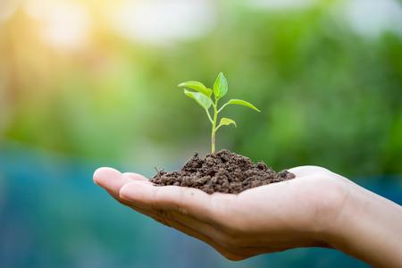 Foto de Close up image of human hands holding sprout - Imagen libre de derechos