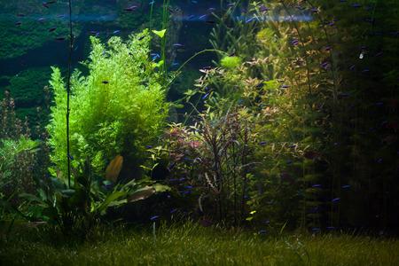 Underwater plants in the Rio Negro, Brazil.