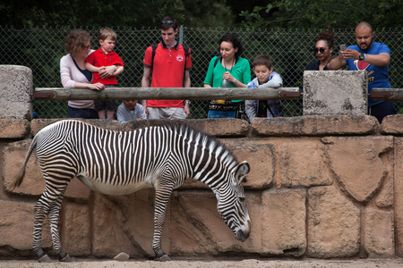 LES MATHES, FRANCE - JULY 4, 2016: Visitors looking at the Grevy zebra (Equus grevyi), also known as the imperial zebra at La Palmyre Zoo (Zoo de La Palmyre) in Les Mathes, Charente-Maritime, France.
