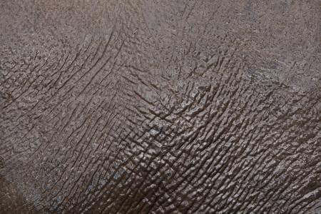 Asian elephant (Elephas maximus). Skin texture.