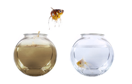 Conceptual image of a fish jumping from his polluted bowl into a clean fishbowl