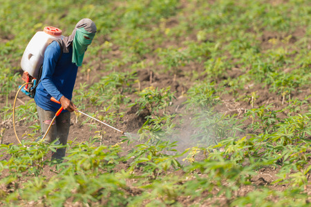 Photo pour Thailand Man farmer to spray herbicides or chemical fertilizers on the fields green manioc growing. - image libre de droit