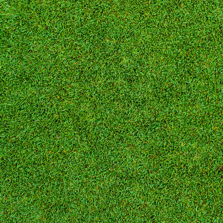 Photo pour Background and texture of Beautiful green grass pattern from golf course - image libre de droit