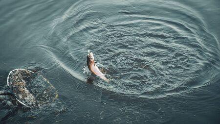 Photo pour Sport fishing area trout. Trout fishing spinning. - image libre de droit