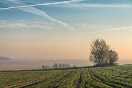 Photo pour Autumn field at dawn. Fog. - image libre de droit