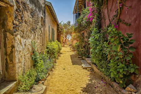 Photo pour Street on Gorée island, Senegal, Africa. They are colorful stone houses overgrown with many green flowers. It is one of the earliest European settlements in Western Africa, Dakar. - image libre de droit