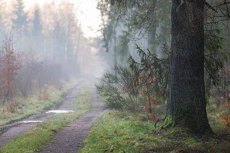 Photo pour Forest road in the fog. Path leading through the forest. Autumn season. - image libre de droit