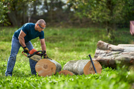 Photo for Lumberjack cutting beech logs with the chainsaw - Royalty Free Image