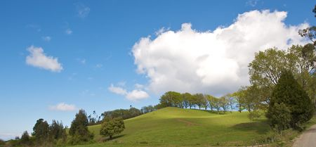 Spring landscape - green field trees and the blue sky with clouds