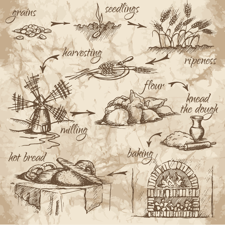 Illustration pour Freehand drawing of bread production stages on the old watercolor background. From grains to bread. Fresh, tasty and hot bread. - image libre de droit