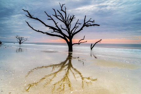 Live Oak trees are silhoutted and reflected on the beach at Botany Bay on Edisto Island near Charleston, South Carolina.