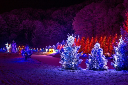 christmas fantasy - pine trees in x-mas lights, Cazma, Croatia
