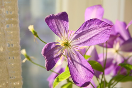 Indoor grown flower