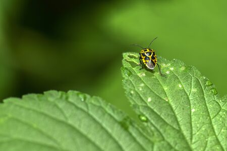 Photo for Close-ups of different insects inhabiting wild plants  - Royalty Free Image