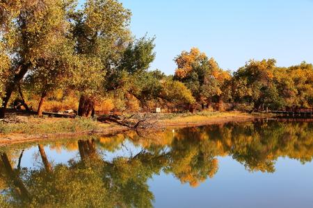 populus euphratica landscape scenery view