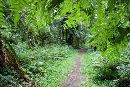Track in the atlantic rainforest, south of Brazil.