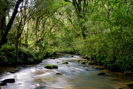 River with rocks and moss in the Brazilian Atlantic rainforest.