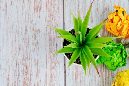 Foto de top view,green potted plant on wooden desk, copy space for text o left - Imagen libre de derechos
