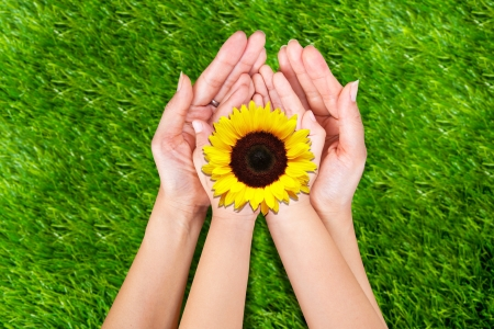 Photo pour Mother and son offer yellow sunflowers on green grass - image libre de droit