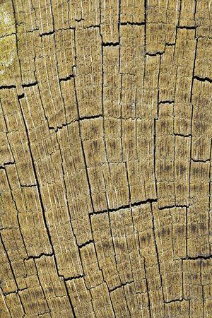 Cracked butt-end of an old oak log