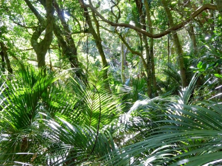 Bushland with palms in Wenderholm Regional Park near Auckland