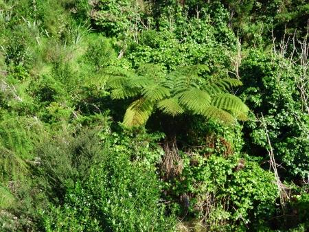 Native bushland vegetation with palm trees and bushes on Motutapu Island near Auckland