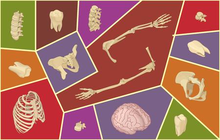 Isometric vector illustration with human bones. Skeletal anatomy set. Isol