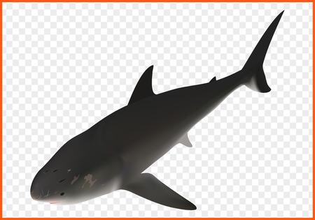 shark fish vector isometric illustation. ravenous inhabitant of sea
