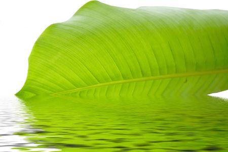 nature, leaves , leaves
